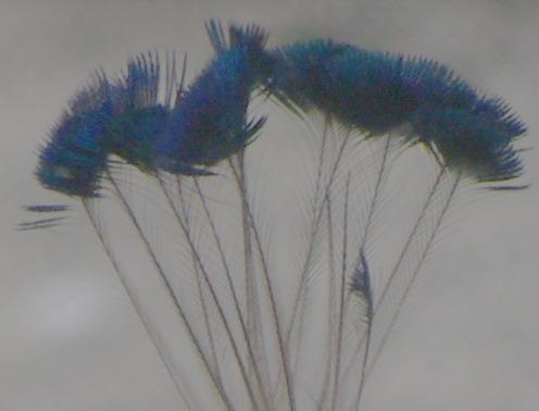 2007-08-07 11-18-07_0424_exposure_.jpg