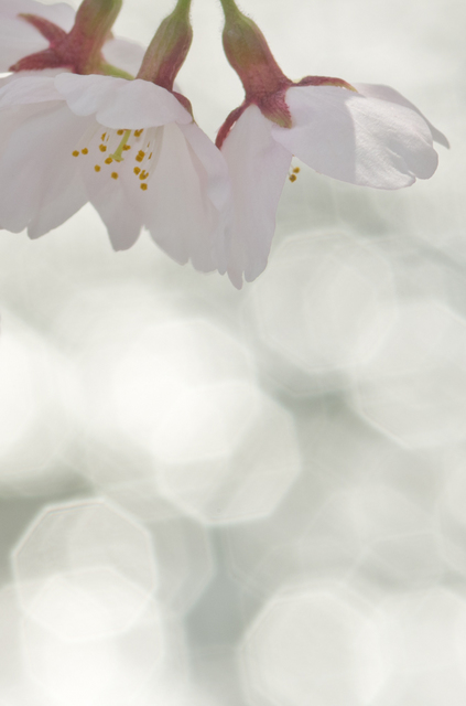 20110410-_IGP3836.jpg
