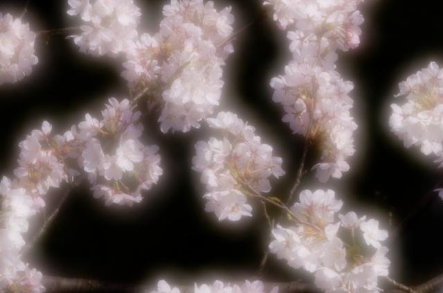 20110410-_IGP3897.jpg